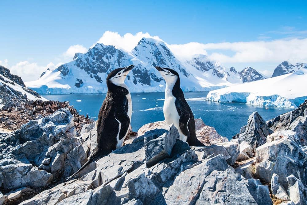 Conoce a los pingüinos barbijo en un crucero a la Antártida durante 2021 con Norwegian