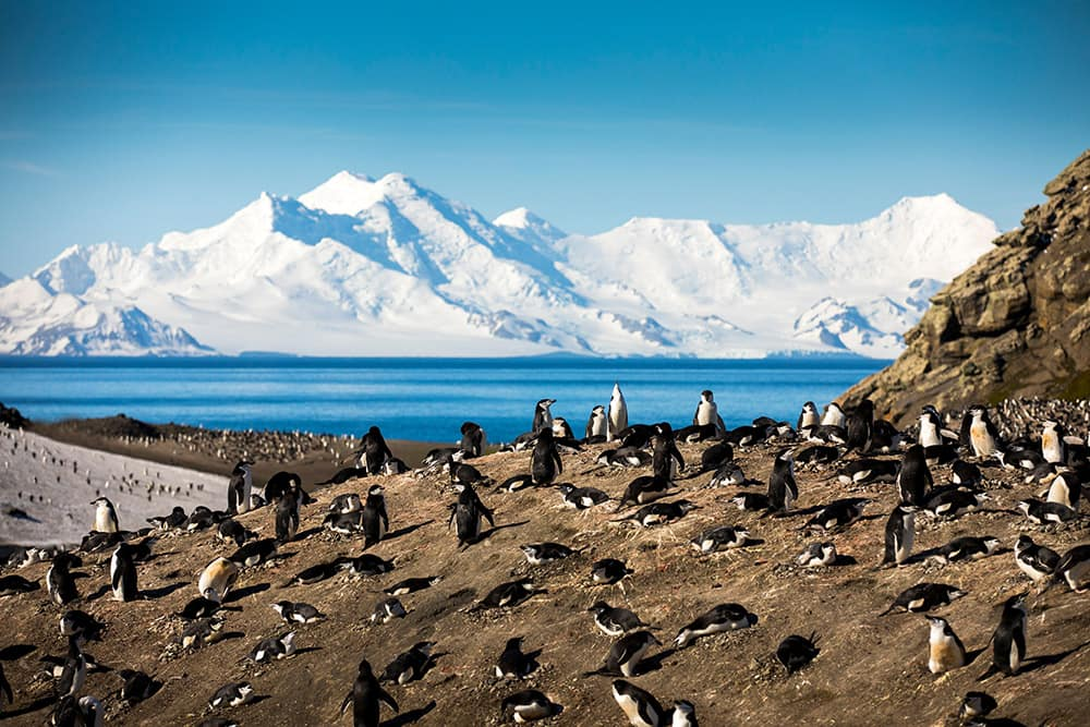 Isla Decepción: pingüinos barbijo