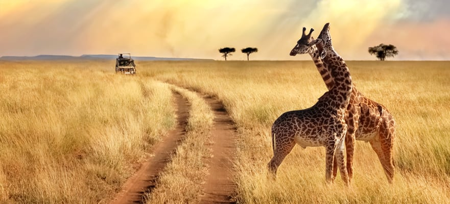 Safari por África y Seychelles, crucero de 21 días
