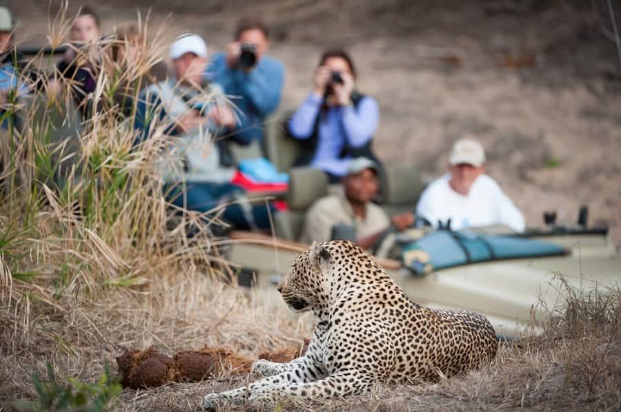 Enjoy a Safari on one of Norwegian's Cruises to Africa