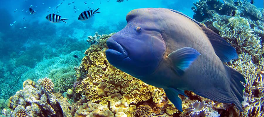 Peces en la Gran Barrera de Coral en cruceros a Airlie Beach