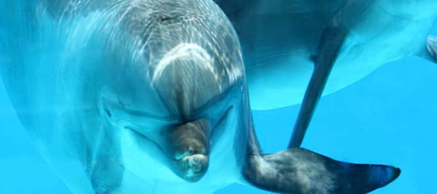 Nada con delfines en cruceros a Akaroa