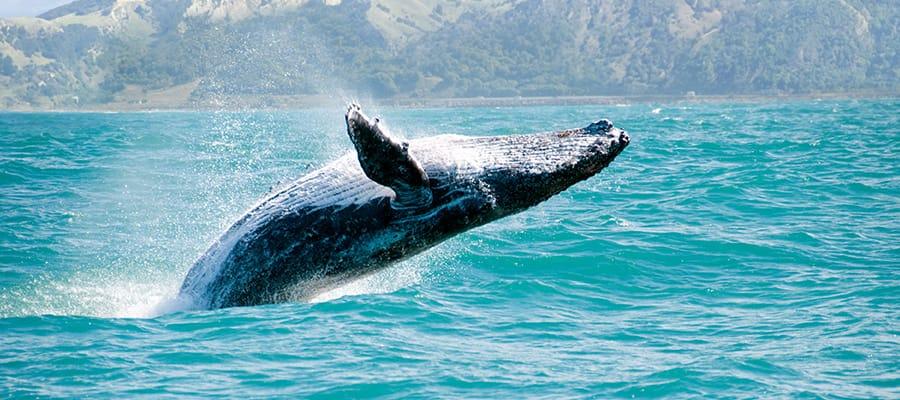 Avistamiento de ballenas en un crucero a Auckland