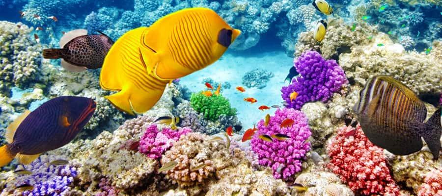 Hermoso arrecife de coral en un crucero en Australia