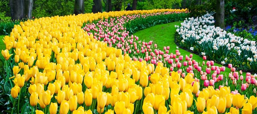 Visita los jardines del parque Keukenhof en tu crucero por Europa