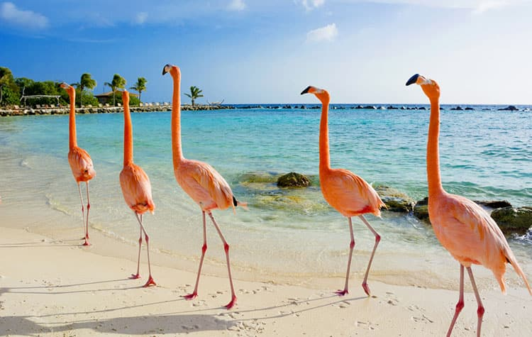 La costa prístina de Aruba