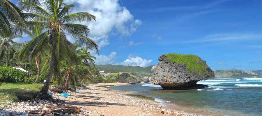 Disfruta del sol en una playa llena de palmeras en tu crucero por el Caribe