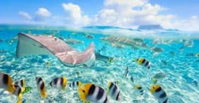 Día en la Polinesia con almuerzo en motu