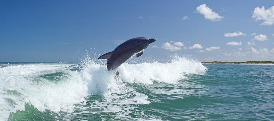 Delfines juguetones en un crucero a la Bahía de las Islas