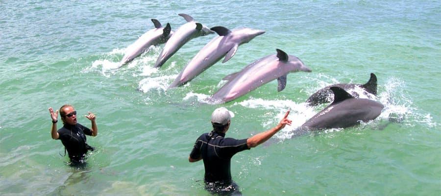 Encuentro con delfines en Belice