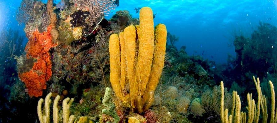 Colorido paisaje submarino en tu crucero por el Caribe