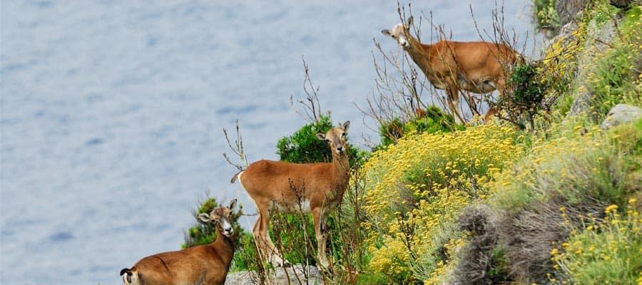 Mira los animales silvestres en tus vacaciones en Cagliari