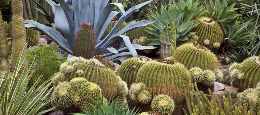Jardín botánico Huerto del Cura en tu crucero a España
