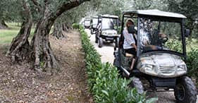 Tour ecológico y bodega Cantina Monte Vibiano
