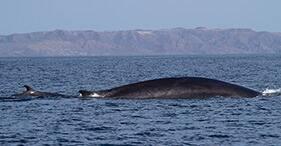 Crucero por la costa para avistar ballenas