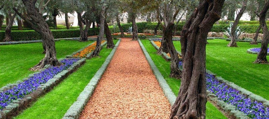 Jardín de olivos del templo Baha'i en Haifa