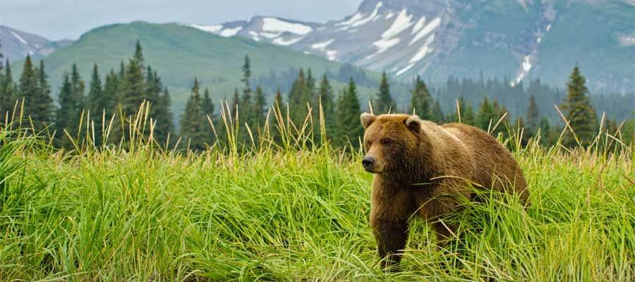 Admira los animales silvestres en tu crucero por Alaska