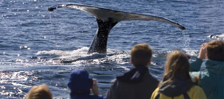 Avistamiento de ballenas en tu crucero a Icy Strait