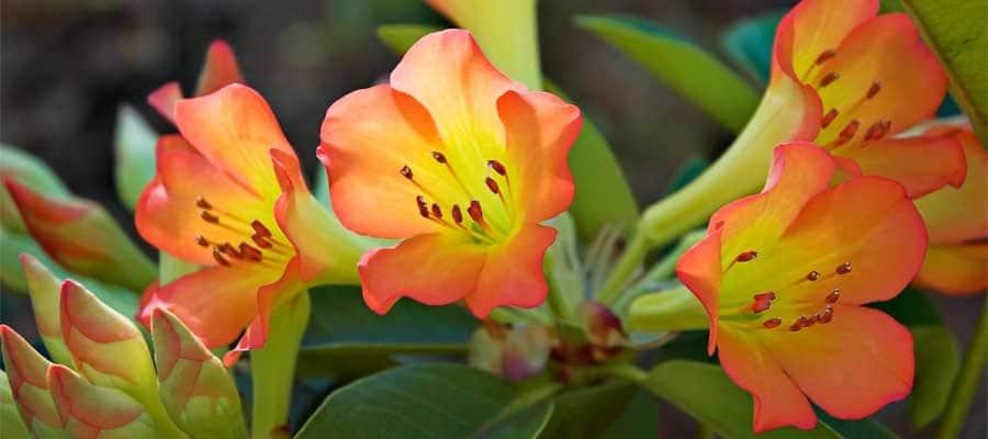 Flores coloridas en tu crucero desde Hilo