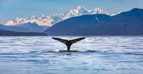 Avistamiento de ballenas y vida silvestre