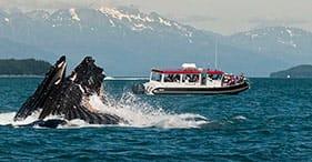 Ballenas y senderos en el bosque de Alaska