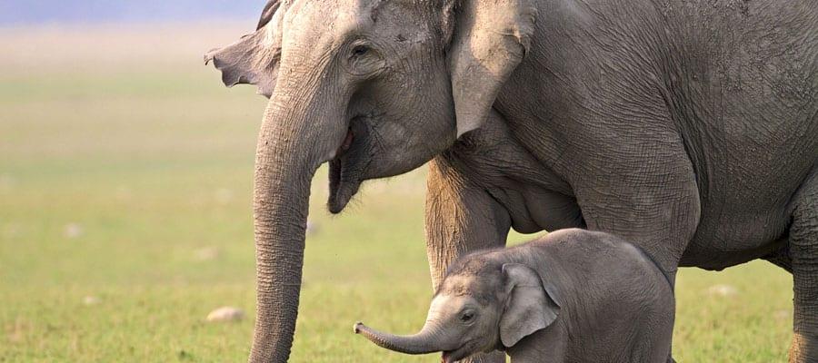 Amables elefantes en tu crucero a Ko Samui