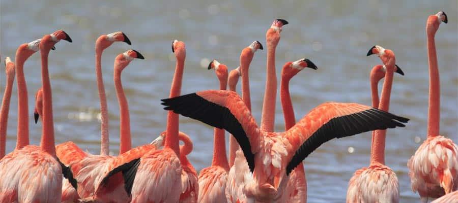 Mira los flamencos en tu crucero a Bonaire