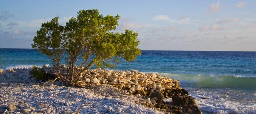Viaja a Bonaire y observa los árboles dividivi junto al océano