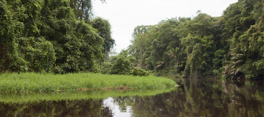 Canales y selva del Tortuguero