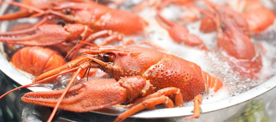 Prueba el cangrejo de río hervido en tu crucero en Nueva Orleans