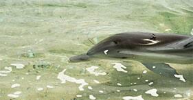 Encuentro con delfines y día de playa en Balmoral Island