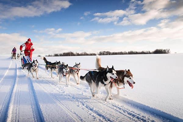 Paseos en trineos tirados por perros en Alaska
