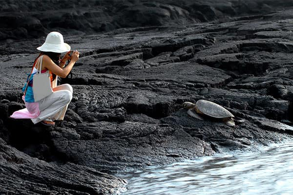 Toma fotos de tortugas marinas en un crucero en Hawái