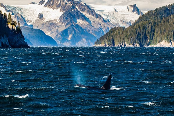Parque Nacional Fiordos de Kenai