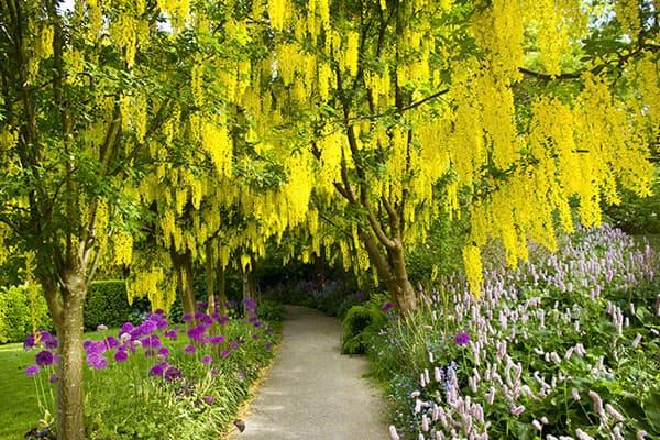Jardín Botánico VanDusen