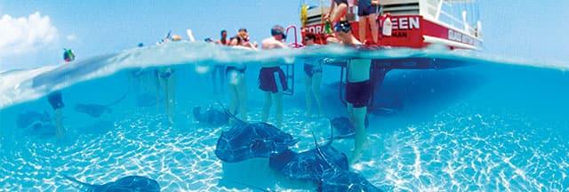 Mantente activo durante tu crucero con una excursión en tierra emocionante como ir a nadar con las rayas