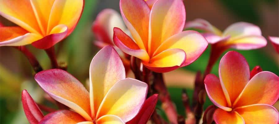 Hermosas flores en Nawiliwili en un crucero a Hawái