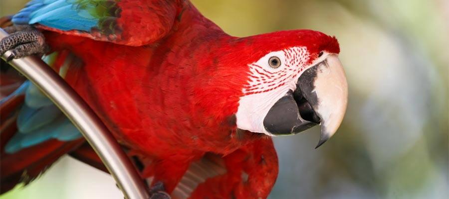 Avistamiento de aves en tu crucero por el Caribe