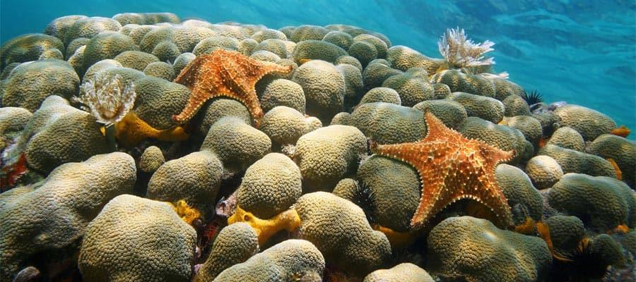 Haz buceo de superficie en tu crucero a Aruba