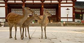 Descubrimiento de Nara y Osaka
