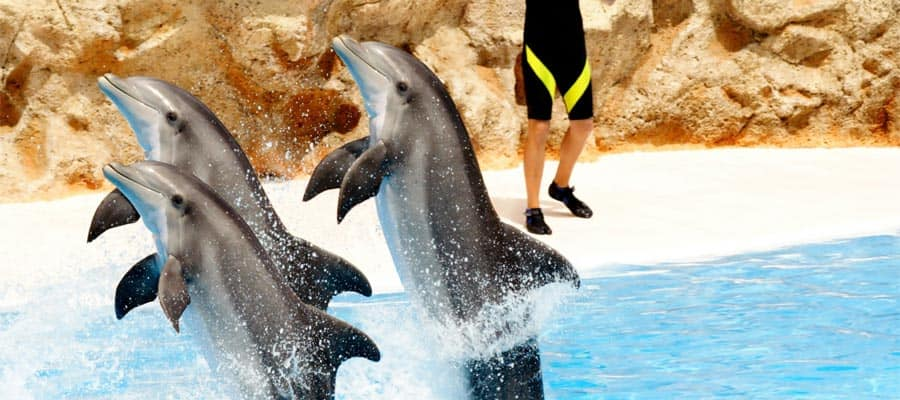 Maravíllate con un espectáculo de delfines