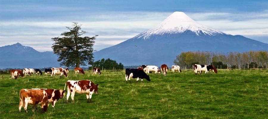Crucero al volcán Osorno
