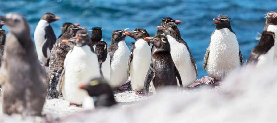 Pingüinos amigables en Puerto Madryn