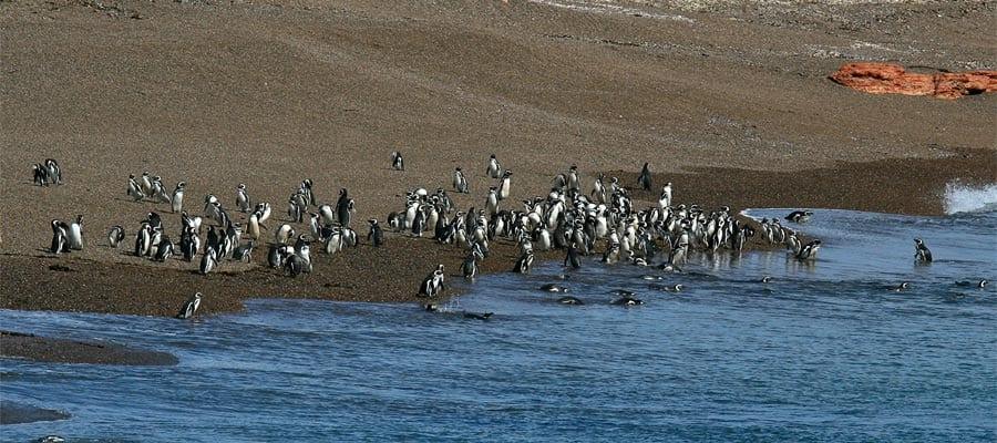 Pingüinos amigables