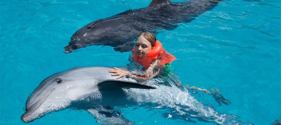 Sube a bordo de nuestros cruceros que parten desde Los Angeles para nadar con los delfines