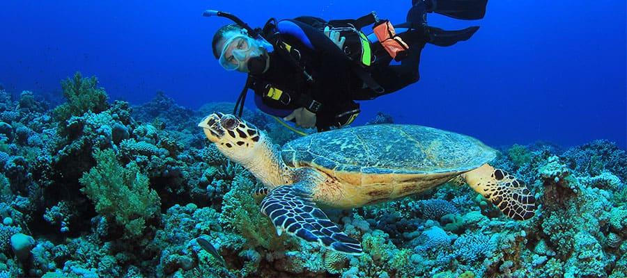 Buceo de superficie en cruceros por el Caribe