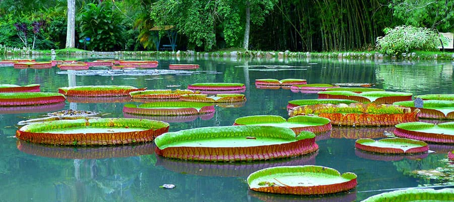 Jardín botánico en un crucero a Río de Janeiro