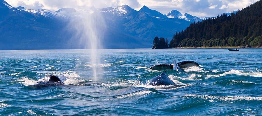 Descubre la fauna silvestre de Seward en tu crucero por Alaska