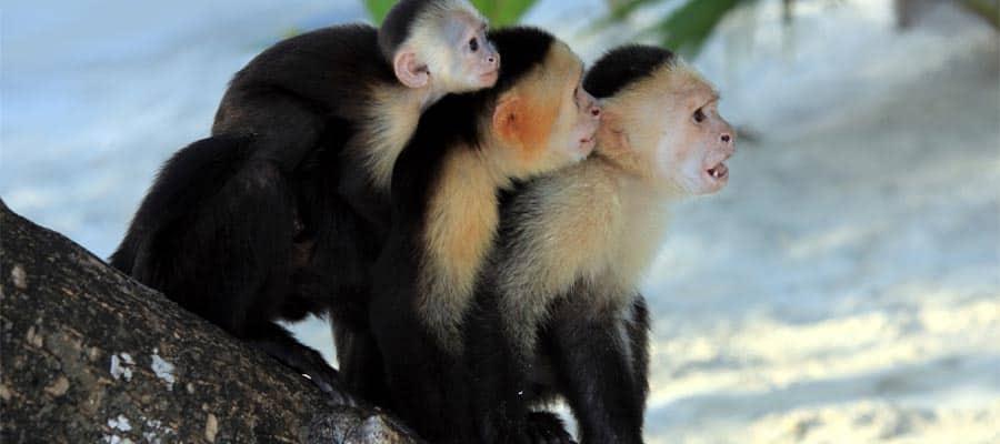 Reserva Gumbalimba y santuario de animales en tu crucero en el Caribe
