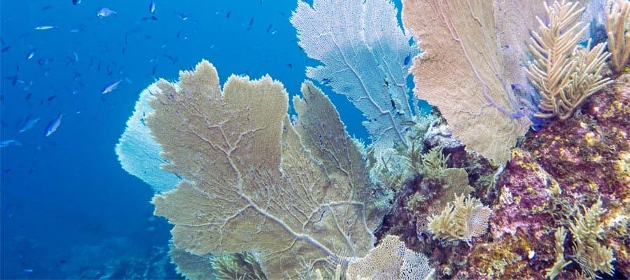 Buceo de superficie en el arrecife del parque marino en Roatán